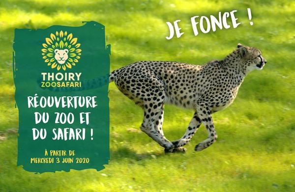 La Réouverture des Parcs et Zoos